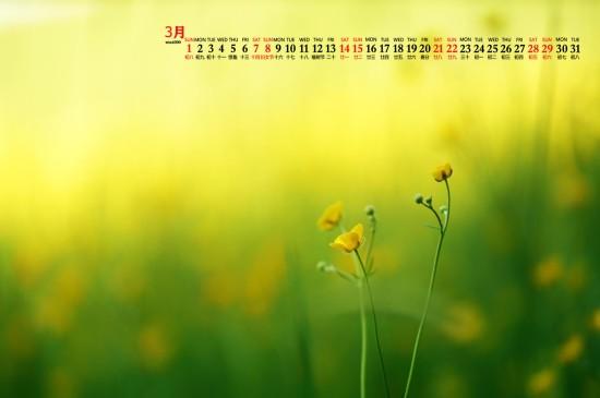 2020年3月清新淡雅植物高清日历壁纸