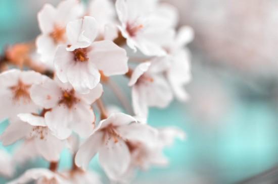 唯美桃花攝影高清桌面壁