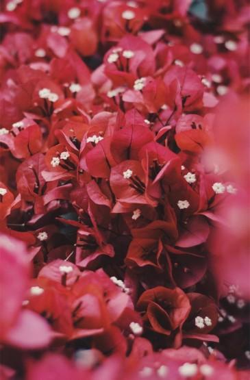 小清新植物花卉高清手機
