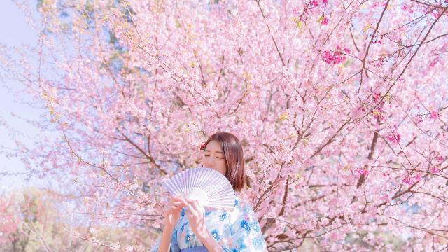 樱花树下甜美元气和服少女天真唯美写真