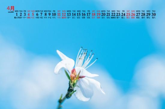 2020年4月小清新花朵图片日历壁纸