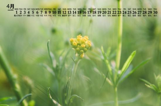 2020年4月绿色植物图片日历壁纸