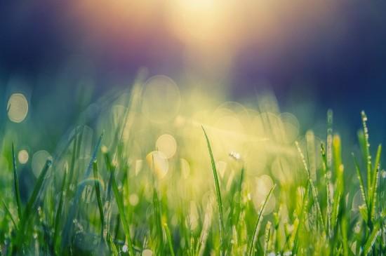 <露珠下的小草唯美高清桌面壁纸