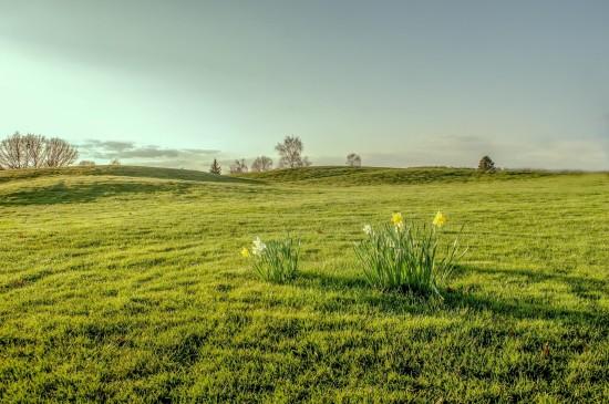 清新优美的草原风景图片桌面壁纸