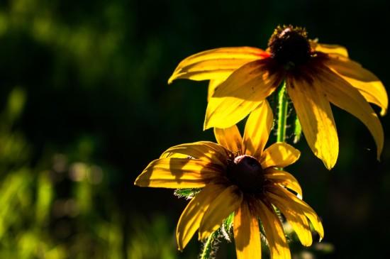 小清新黃色花卉圖片桌面