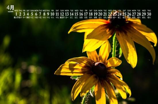 2020年4月唯美清新花卉