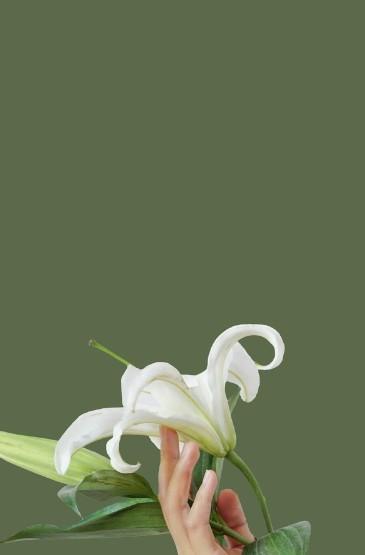 文藝小清新花朵植物高清