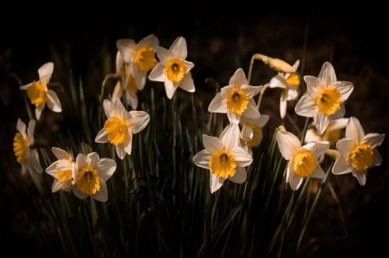 精選超美小花攝影圖片桌