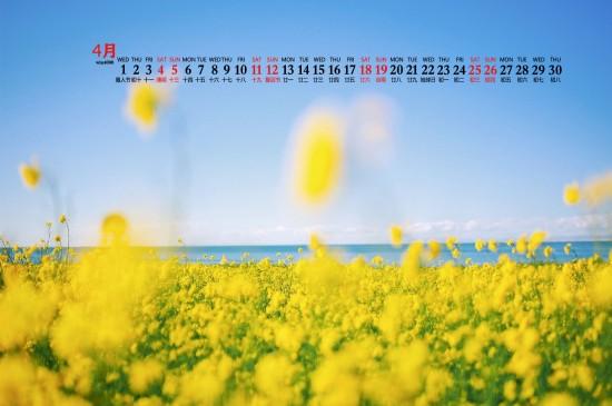2020年4月春天的油菜花