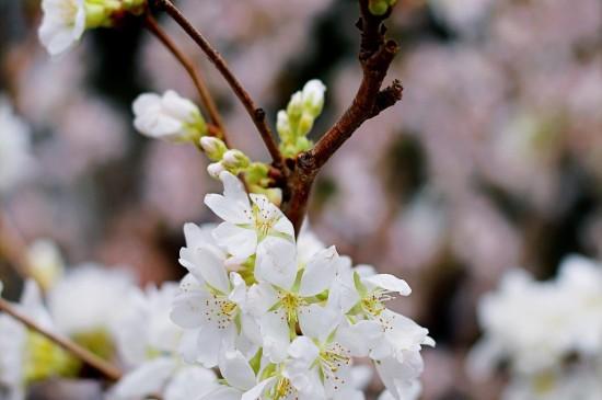 春天唯美花卉植物高清桌
