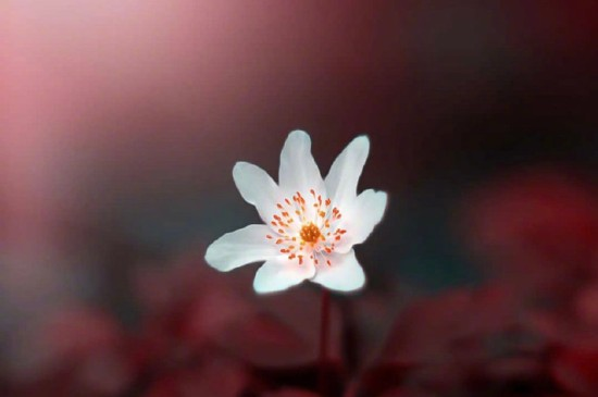 小清新超美花卉圖片桌面