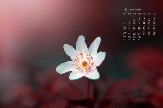 2020年4月高清唯美花卉