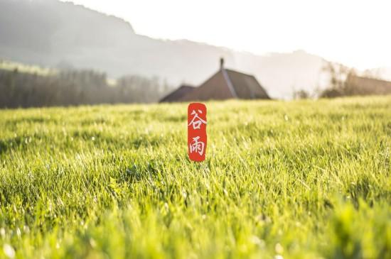 谷雨節氣風景高清桌面壁