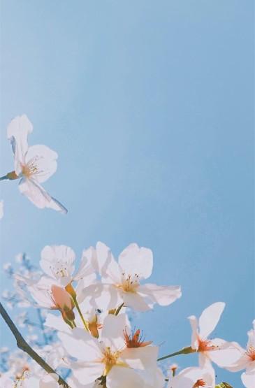 小清新唯美春日花卉手機