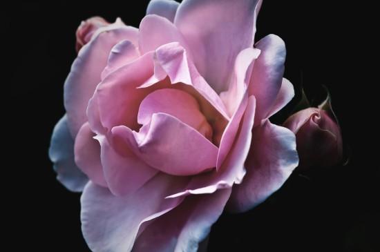 唯美紫色植物花卉圖片桌