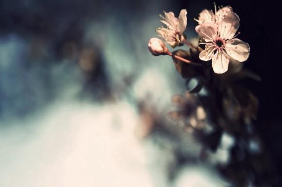 養眼護眼植物花卉高清桌面壁紙
