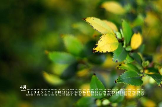2020年4月護眼綠葉風景桌面日歷壁紙