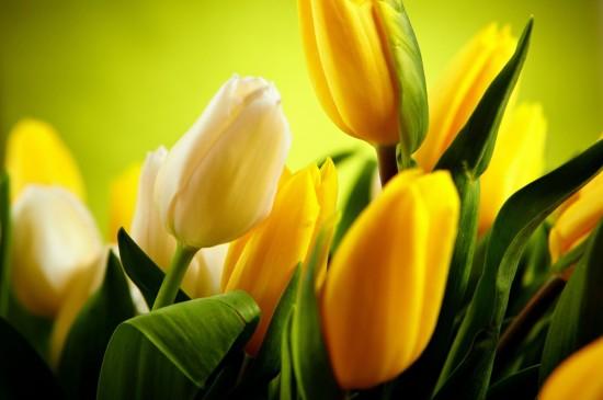 <黄色花瓣唯美花卉植物桌面壁纸