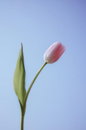 小清新春日花卉摄影手机壁纸