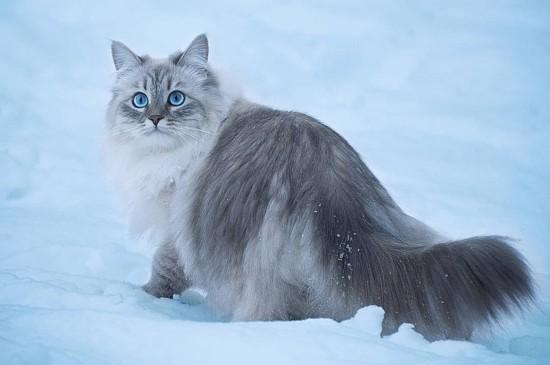 雪地上的猫咪高清桌面壁