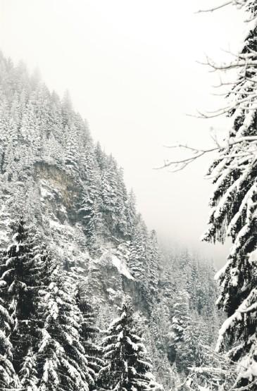 <寒冷冬日雪景图片手机壁纸