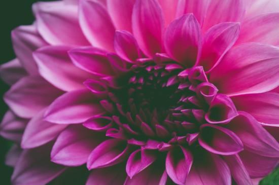小清新春日花卉圖片桌面