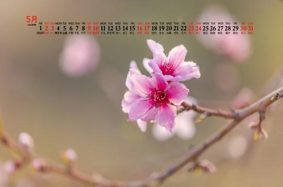 2020年5月小清新粉色花