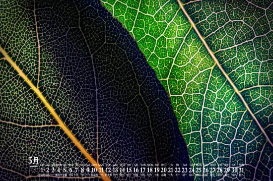 2020年5月清新養眼植物