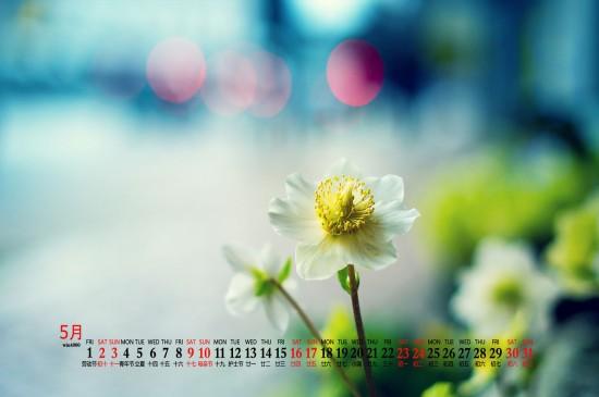 2020年5月绿色植物护眼高清桌面日历壁纸