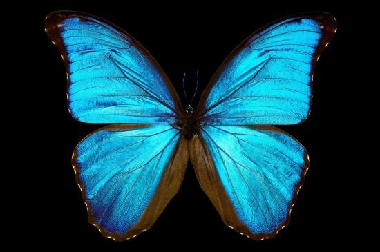 梦幻蝴蝶唯美高清桌面壁纸