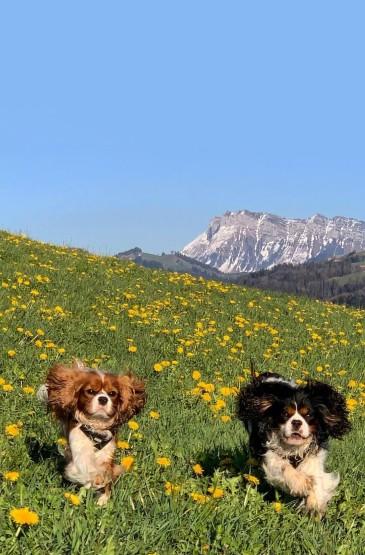 瑞士宁静之美小清新绿色手机壁纸 第二辑