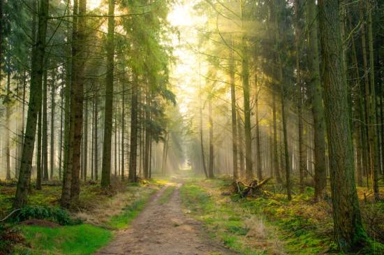 早上森林车道光线风景桌面壁纸